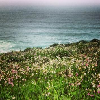 Sonoma Marin Coast