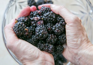 fresh blackberries in hand2